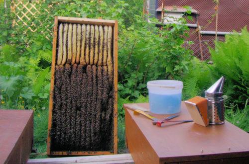 Magazinbeute oder Bienenkiste?